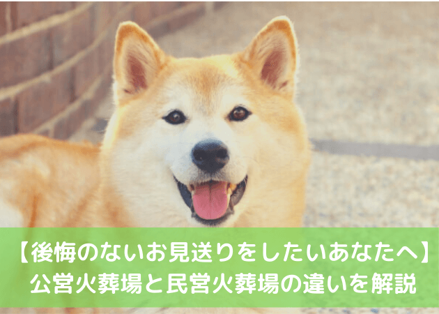 ペット 柴犬