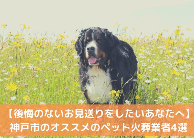 ペット火葬 神戸