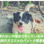 沖縄 ペット 火葬